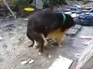 30.dog Fucking Cat